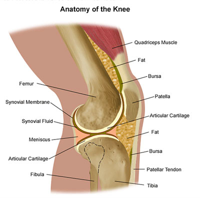 Knee injuries many structures that can cause joint pain sarasota ligament sprains or tears and cartilage tears are among the most common knee injuries they all involve varying degrees of knee joint pain and swelling ccuart